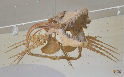 Επίσκεψη Μάγια Μπίλλυ στο μουσείο παλαιοντολογίας και γεωλογίας